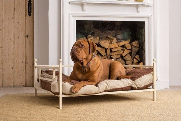iron dog beds