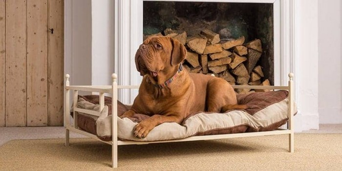 iron dog bed with dog and cushion