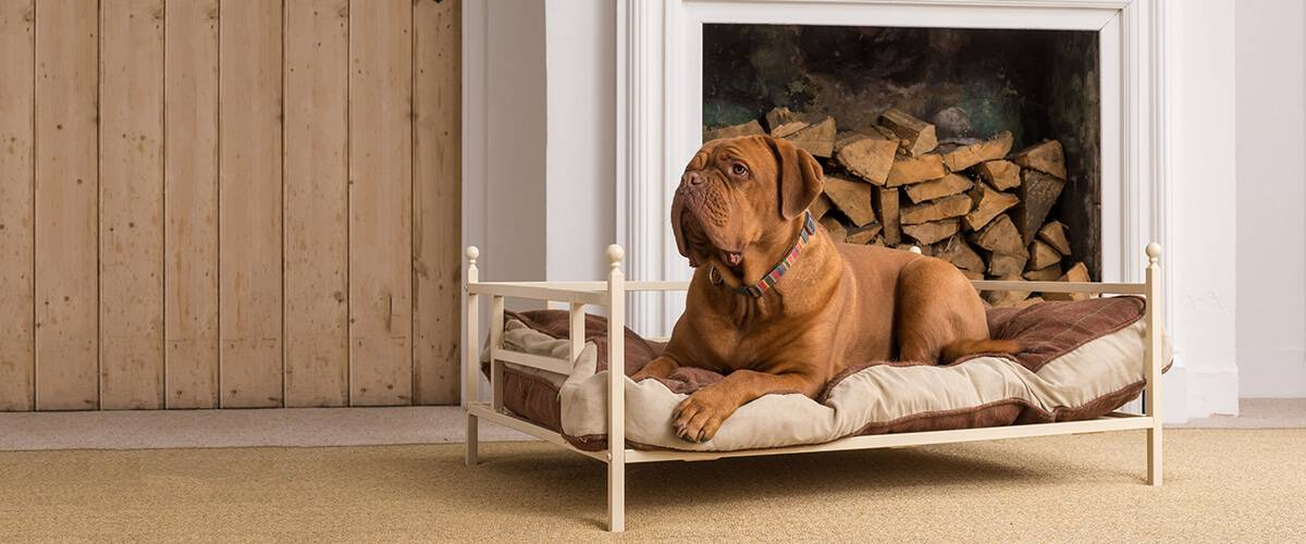 dog in iron bed