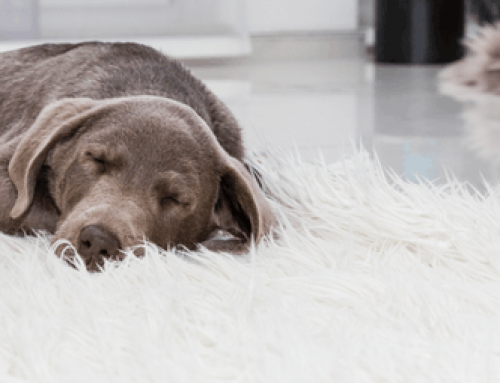 Dogs, Dreams & Separation Anxiety